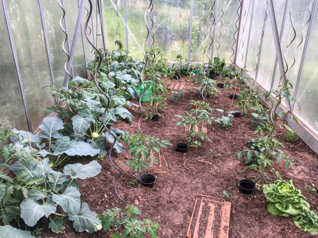 Tomaten giessen leicht gemacht